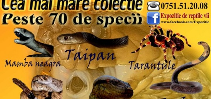 afis expozitie reptile